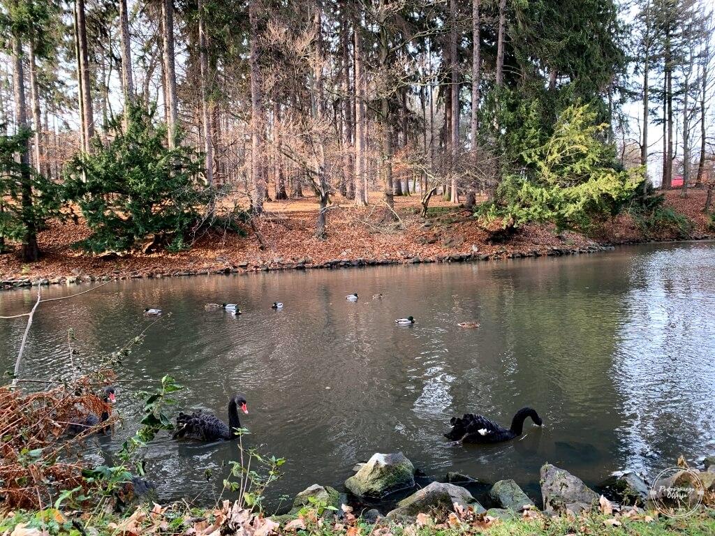 Park Szwedzki w Szczawnie Zdroju