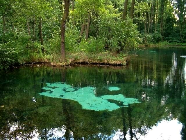 Rezerwat przyrody Niebieskie Źródła