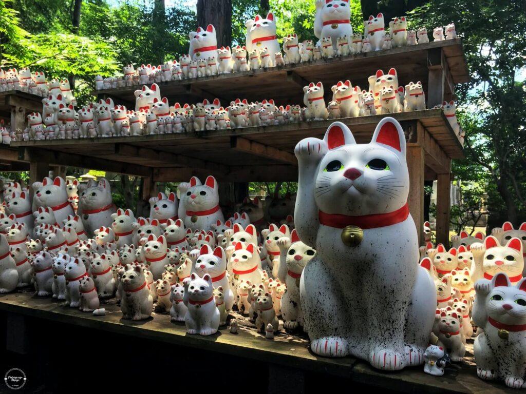 Maneki Neko w świątyni Gotokuji