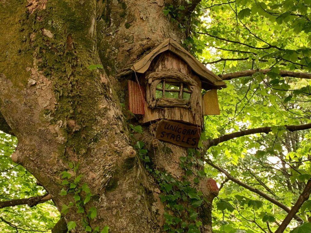 dom wróżki na drzewie